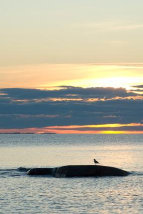 Lokki rantakivellä keskiyön auringossa