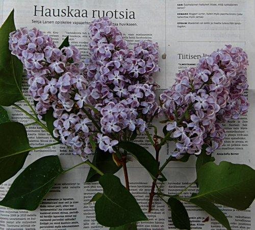Fröken Senja opettaa ruotsia. Kuva lehden aukeamasta jossa syreeninoksa.